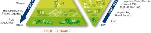 nutrition & environmental pyramids